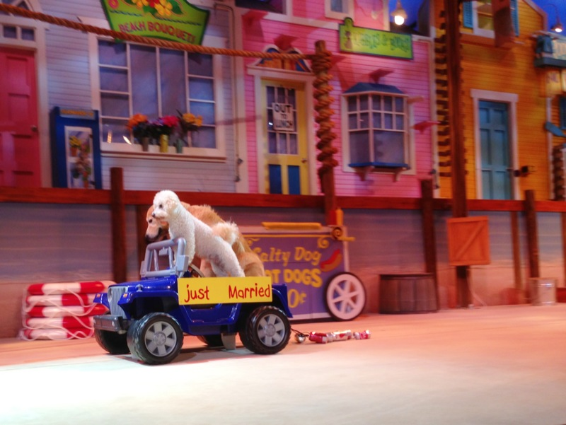 show topic traveling with pets texas